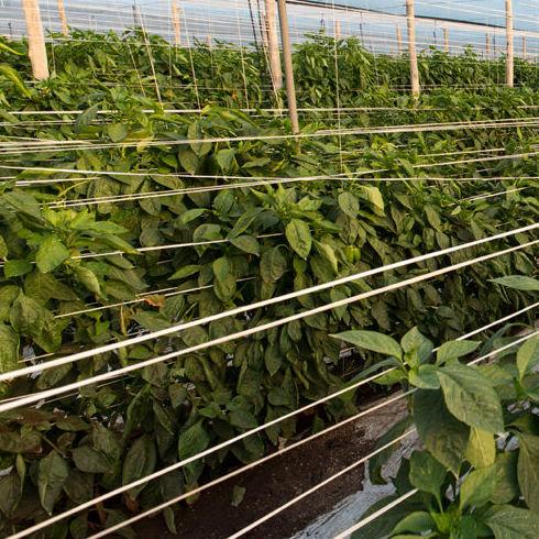Venta online de verduras ecológicas de producción propia