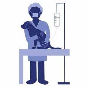 Cirugía veterinaria Cobeña
