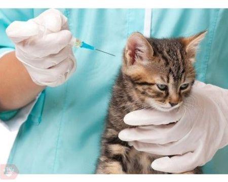 Prevención veterinaria
