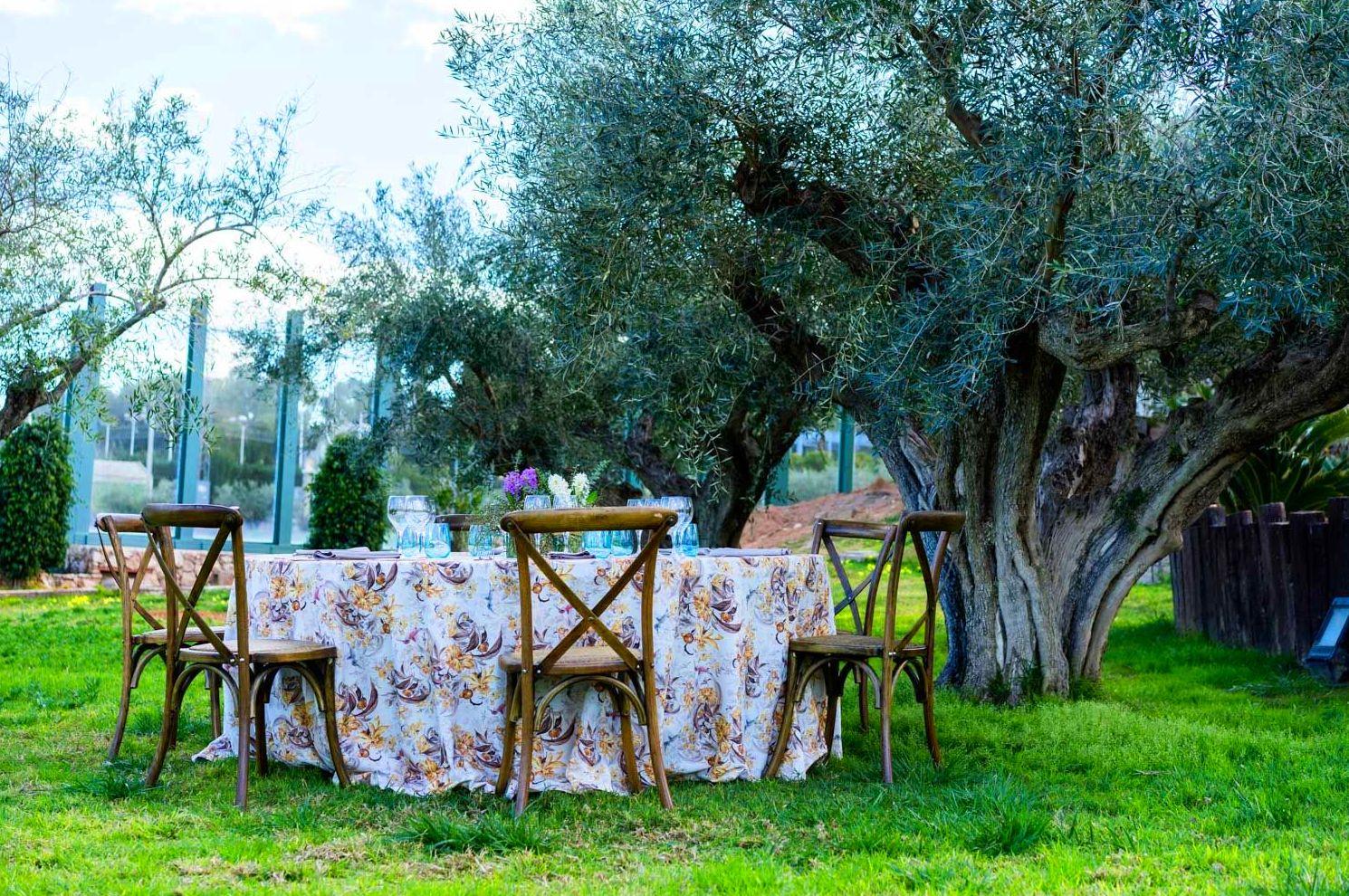 Foto 17 de Alquiler de sillas, mesas y menaje en El Palmar | Mantelería & Menaje
