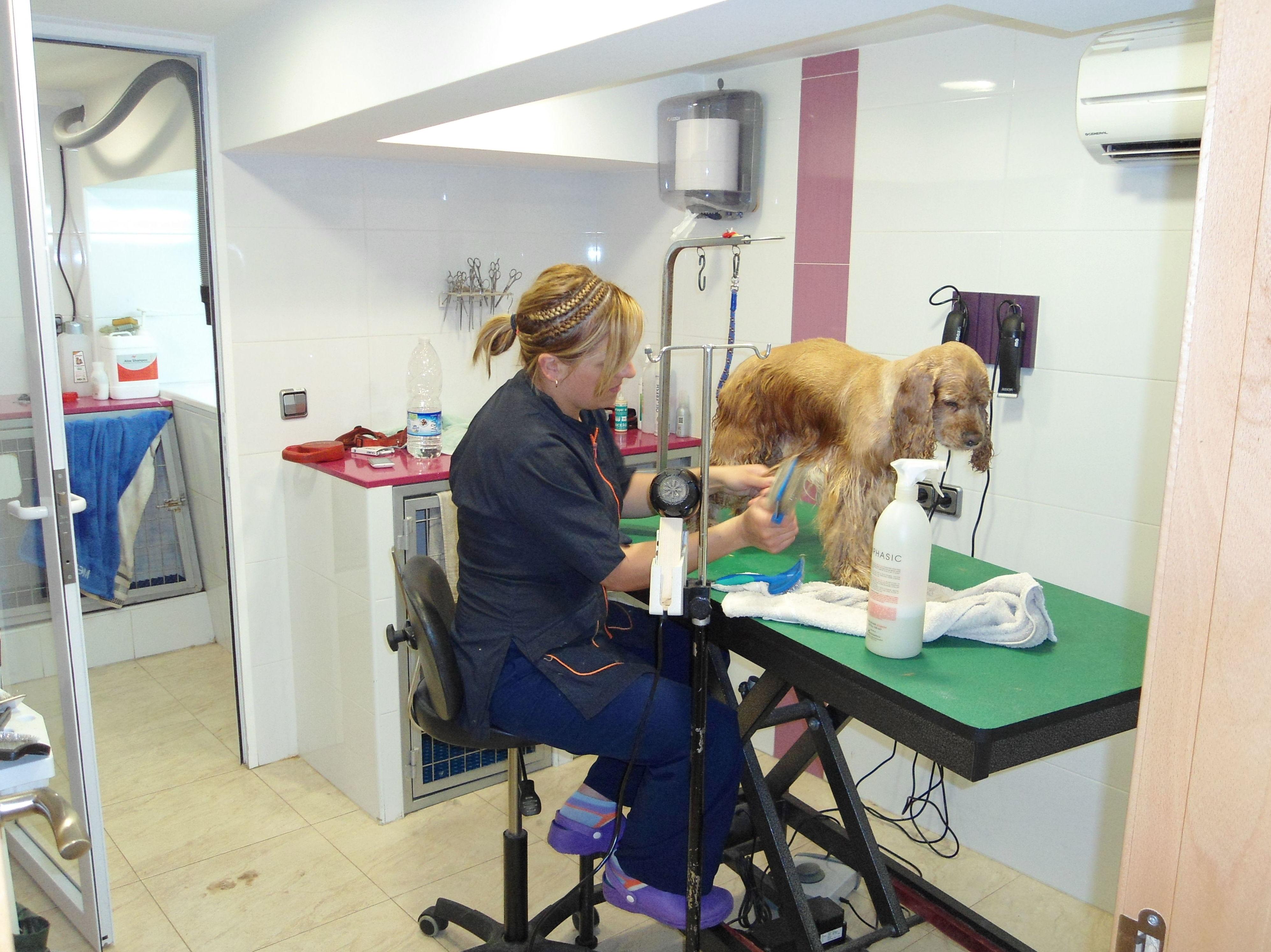 Foto 2 de Veterinarios en El Palmar | Cliper's Clínica Veterinaria