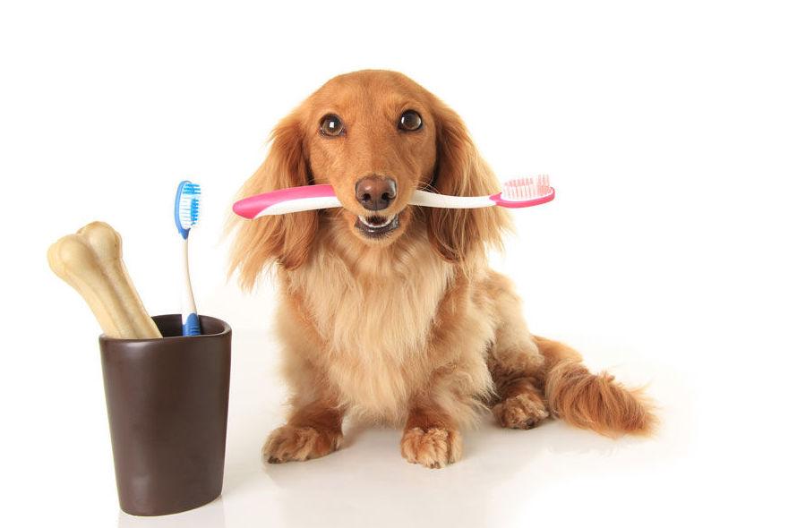 Higiene: Nuestros productos de Pienso Express