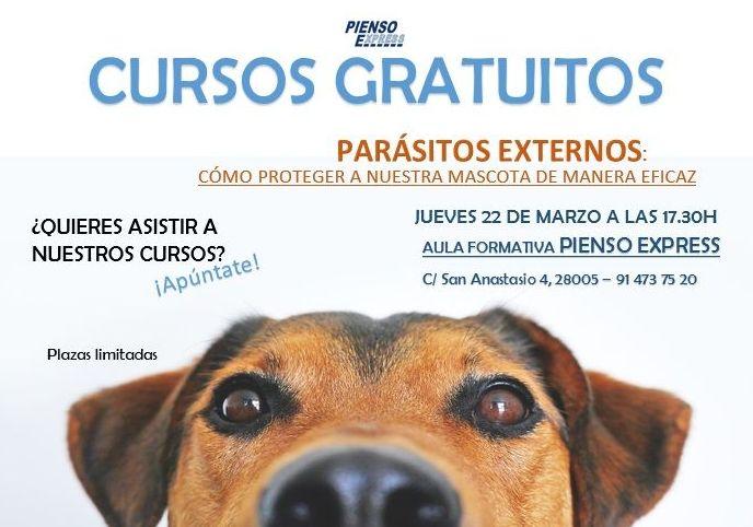 cursos gratuitos veterinaria mascotas