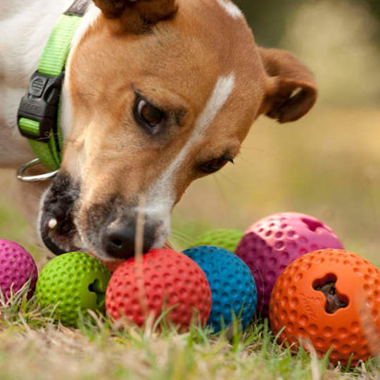 Pelotas Rogz perros Madrid Arganzuela Tienda de mascotas
