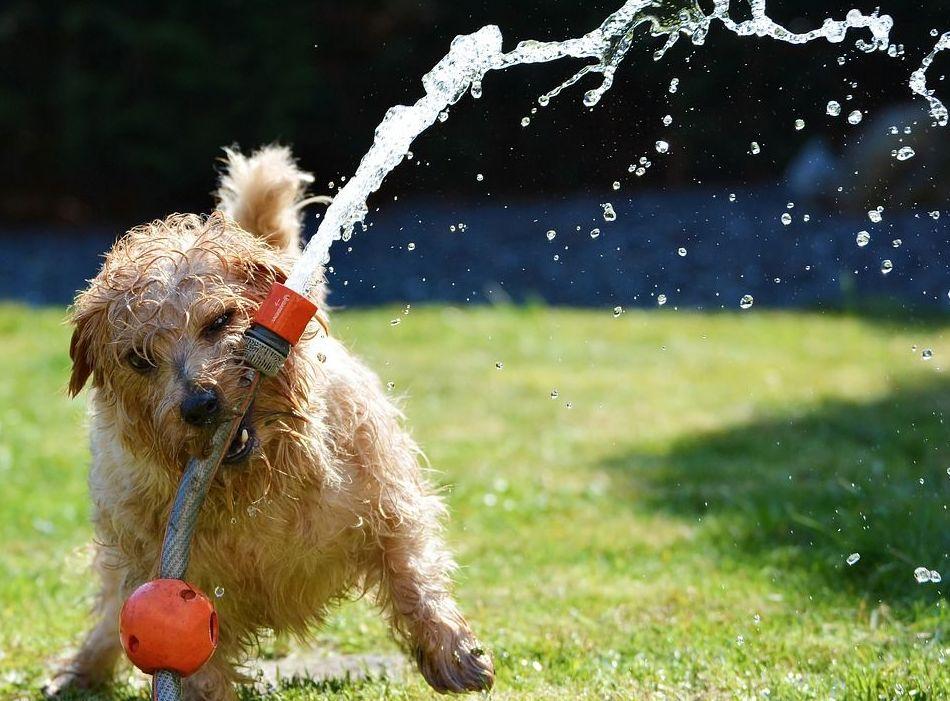 tienda de mascotas Pienso Express  horario de verano