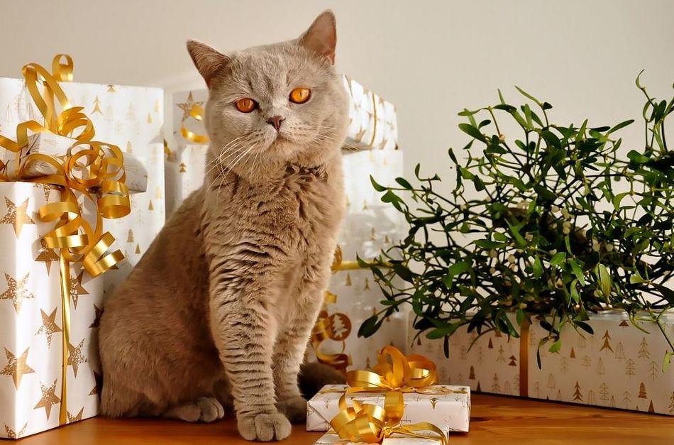 tienda de alimentación mascotas madrid pienso reparto a domicilio gratuito navidad