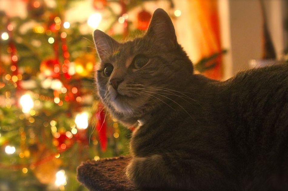 Navidad en Pienso Express