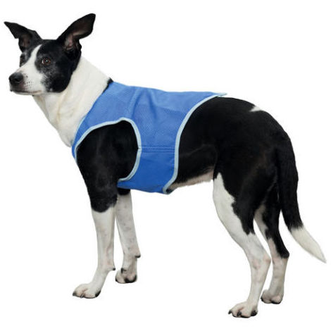 Chaleco refrescante para perros: Nuestros productos de Pienso Express
