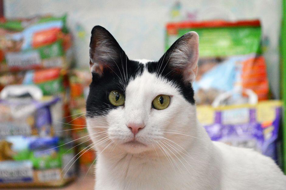 Todo para tu gato en El Racó de la Lola en Terrassa