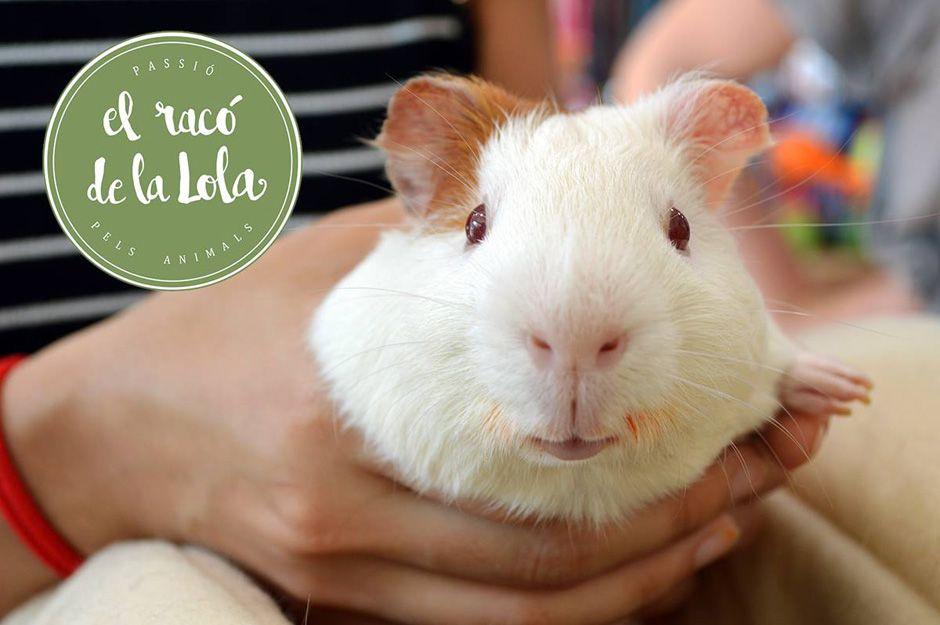 Productos para roedores en Terrassa