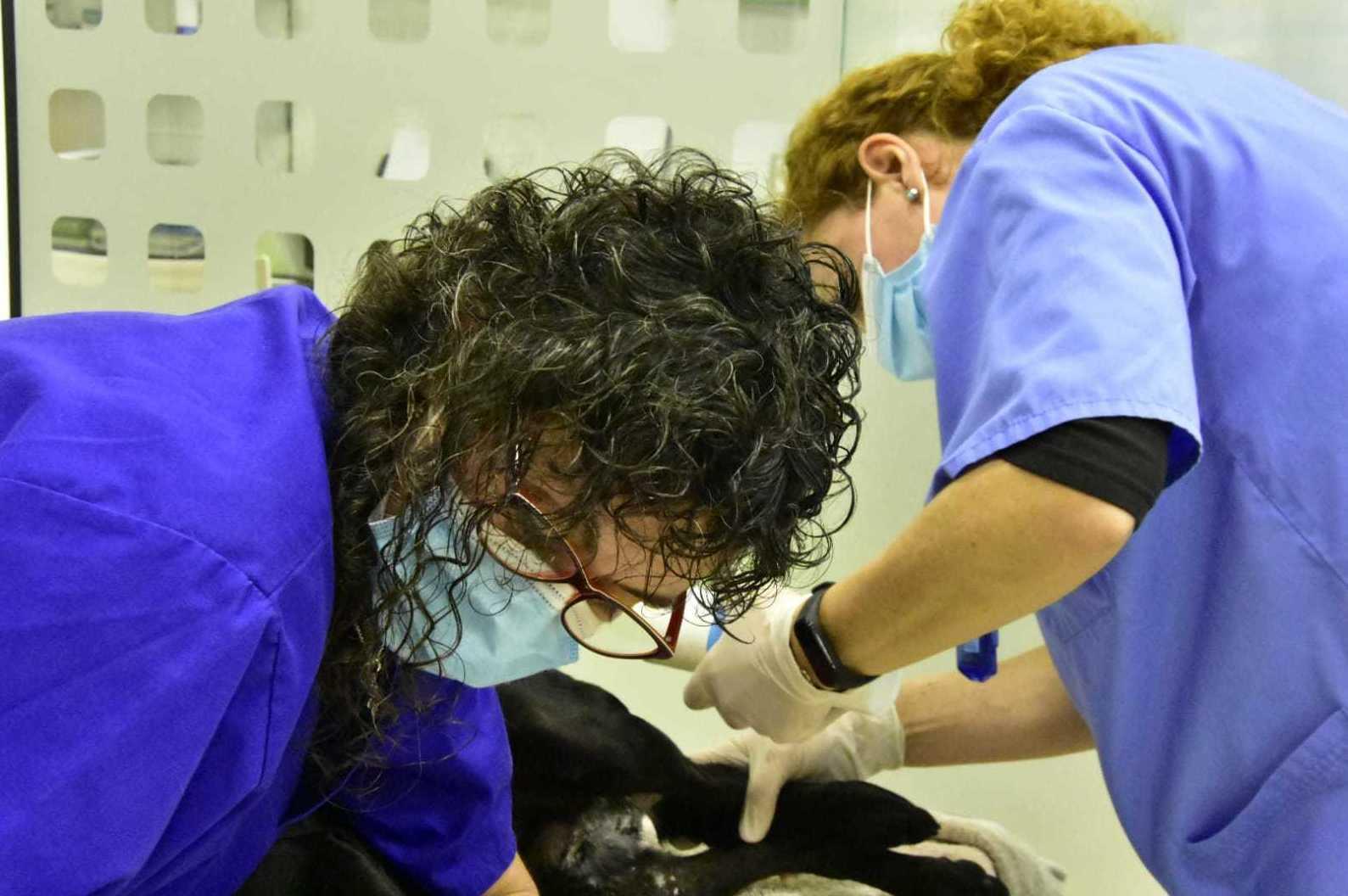 Foto 10 de Clínica veterinaria en  | Clínica Veterinaria Rosvet