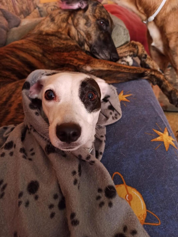 Foto 6 de Clínica veterinaria en    Clínica Veterinaria Rosvet