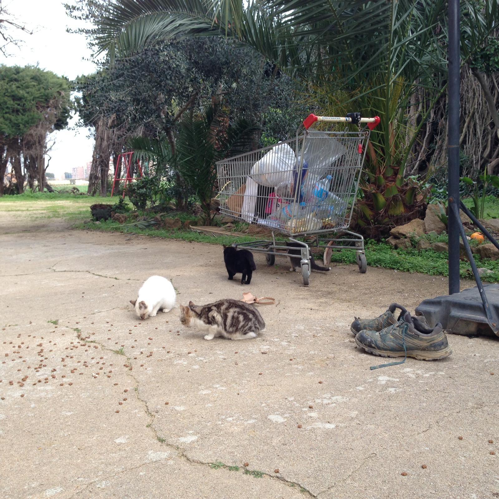 Foto 8 de Clínica veterinaria en  | Clínica Veterinaria Rosvet