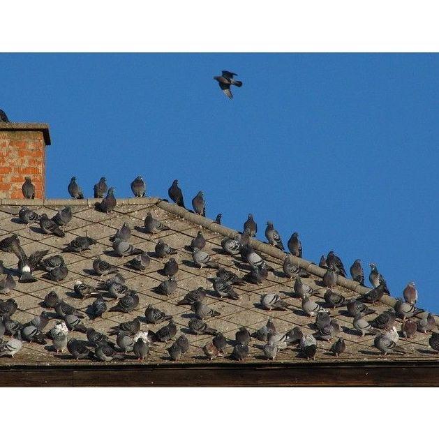 Control de aves urbanas: CATÁLOGO de Biochemical