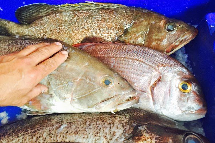 Pescados frescos para nuestros menús