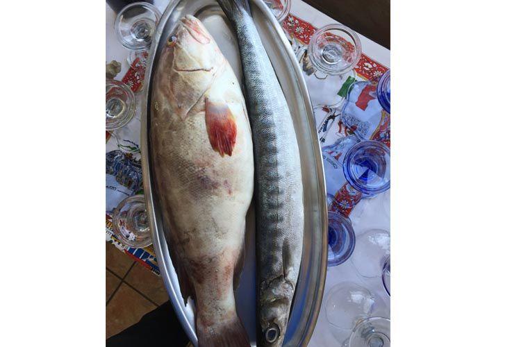 Pescados frescos para nuestros platos