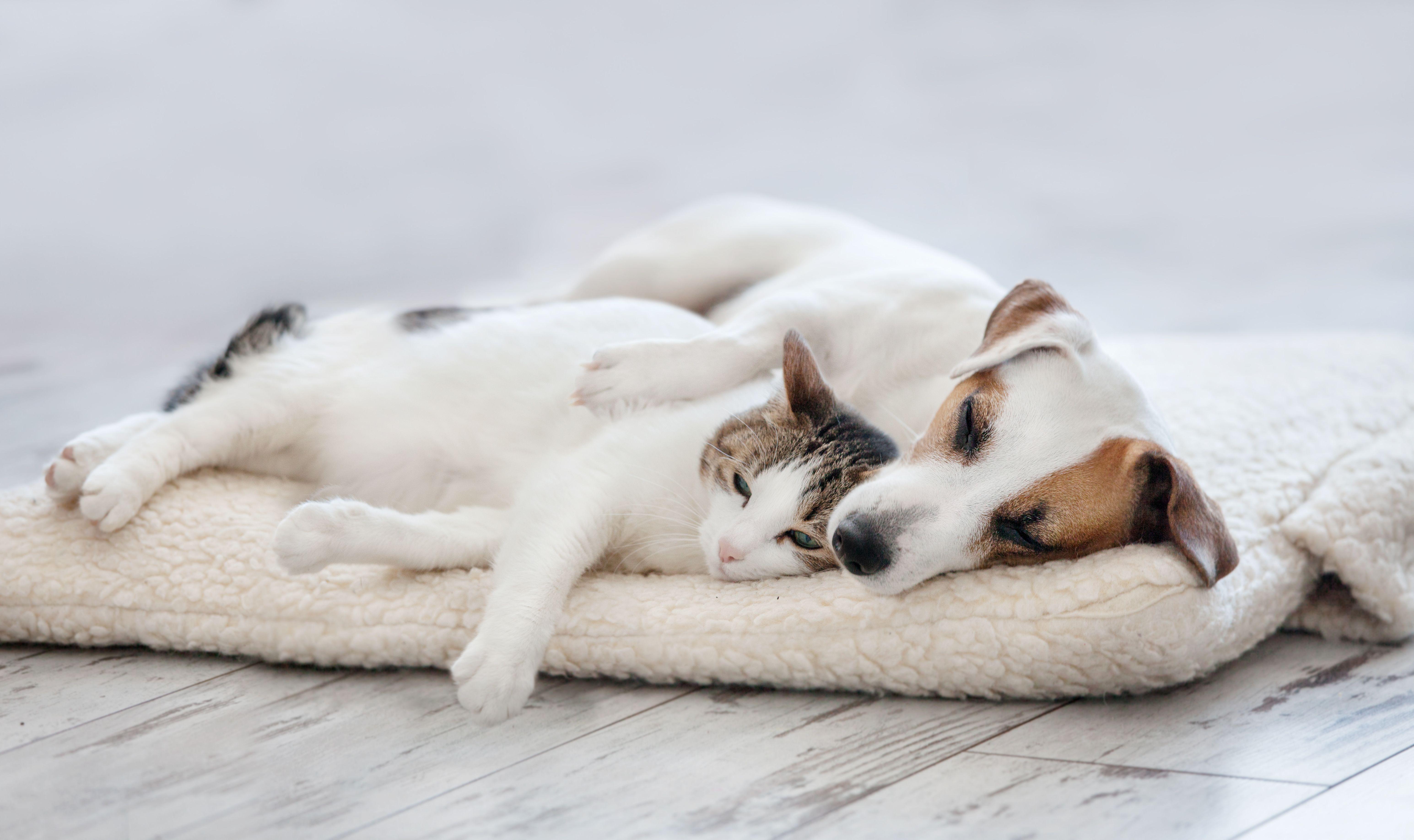 Productos y accesorios para perros y gatos Sants Barcelona