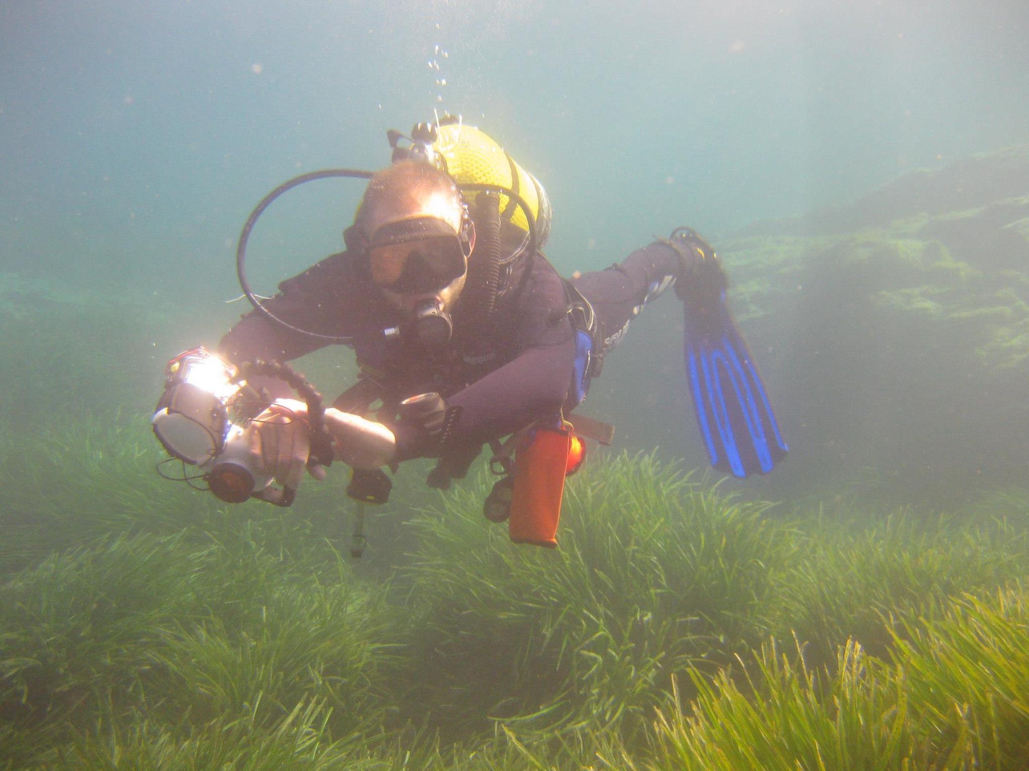 Reportajes de biología marina