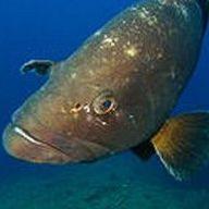 Curso avanzado de biología marina: Servicios de Raya Sub