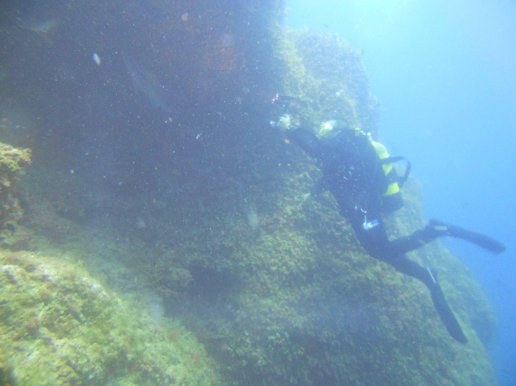 belleza del mundo submarino