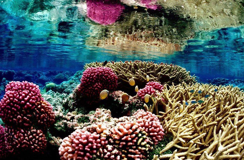 Cursos especies marinas : Servicios de Raya Sub