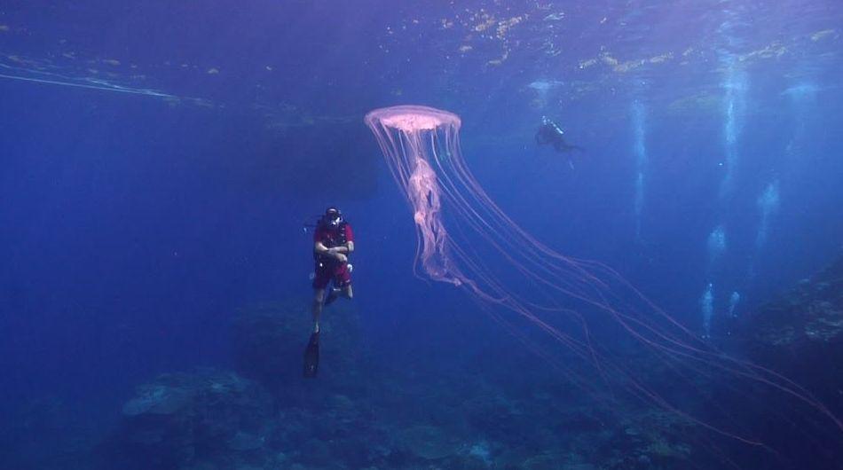 Taller de medusas : Servicios de Raya Sub