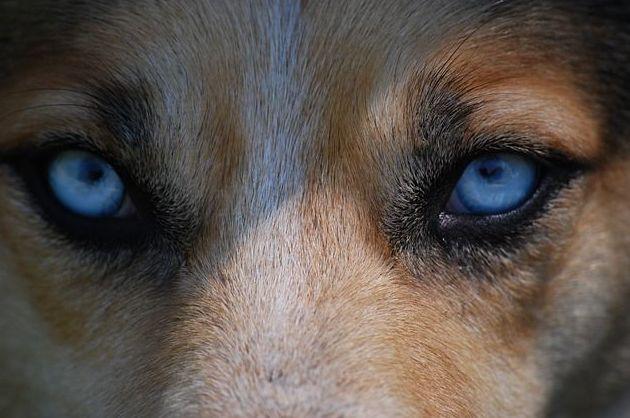 Animales peligrosos: Catálogo de Centro Médico Mercat de Llevant