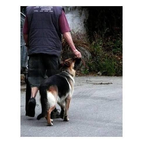 Renovación del permiso de Animales Peligrosos: Servicios de Clínica Serpa Psicotécnico