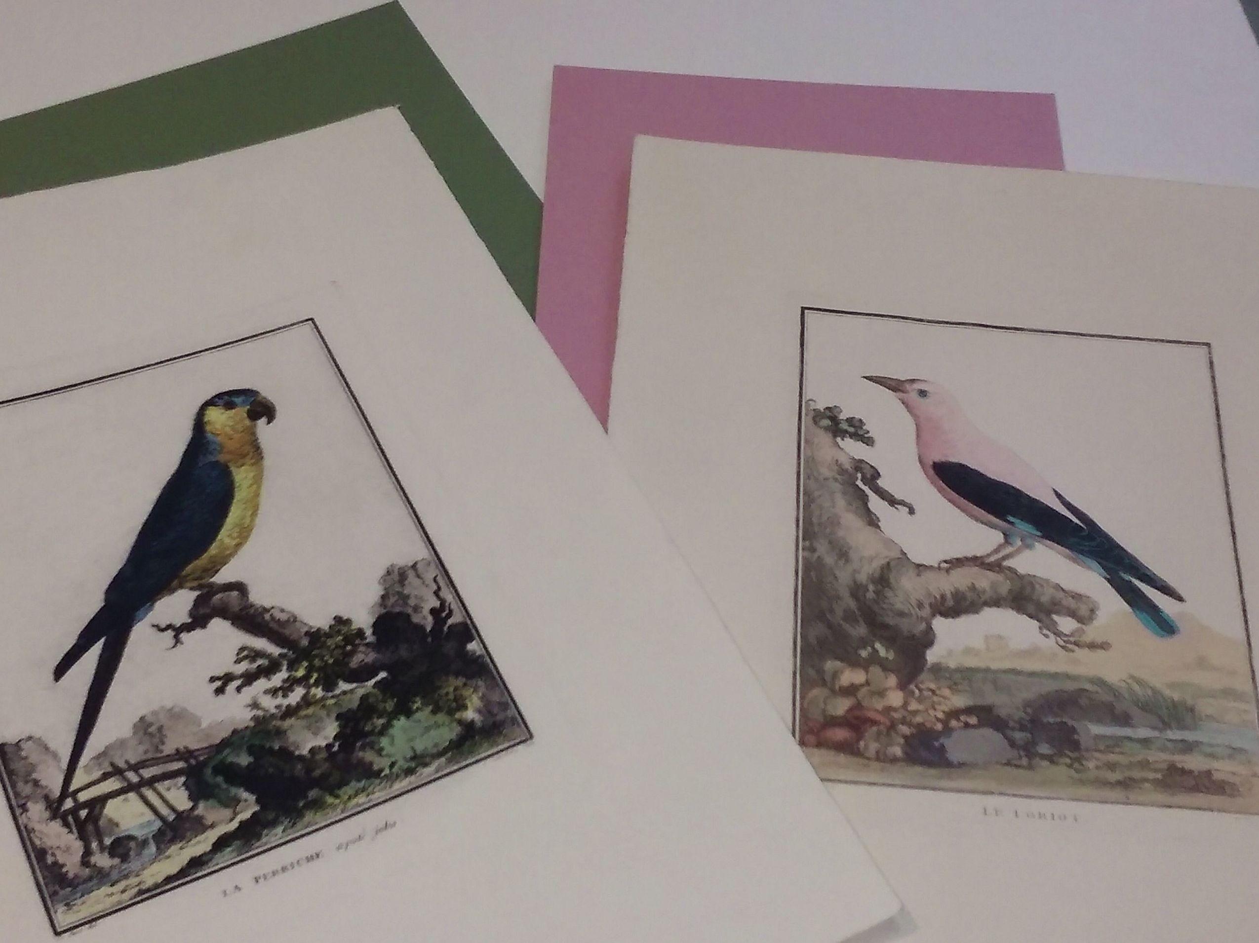 Grabados calcográficos iluminados con acuarelas, colección de aves