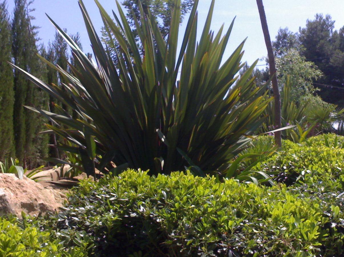 jardineros valencia