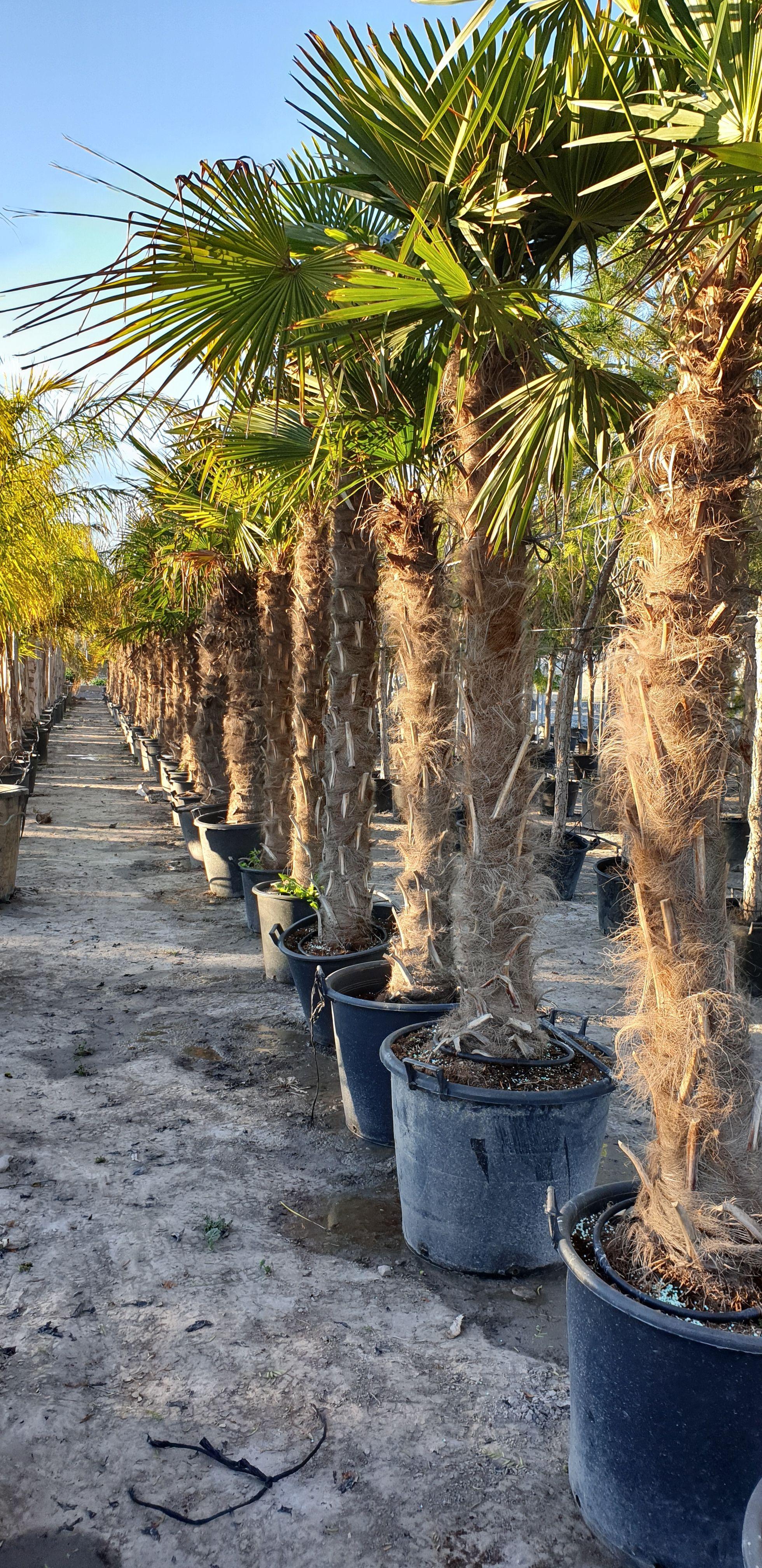 Árboles y plantas en Murcia
