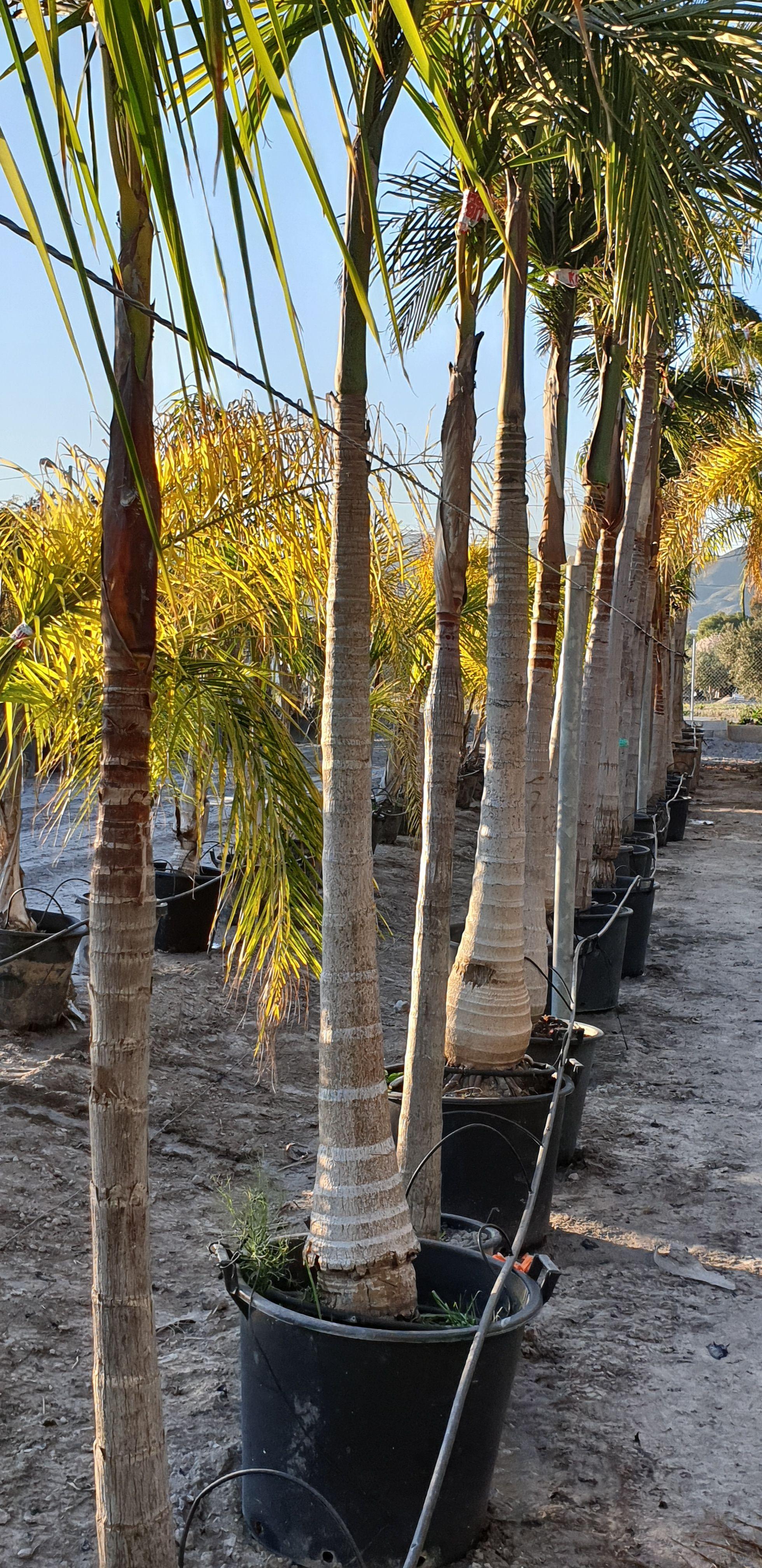 Plantas de interior y exterior Murcia