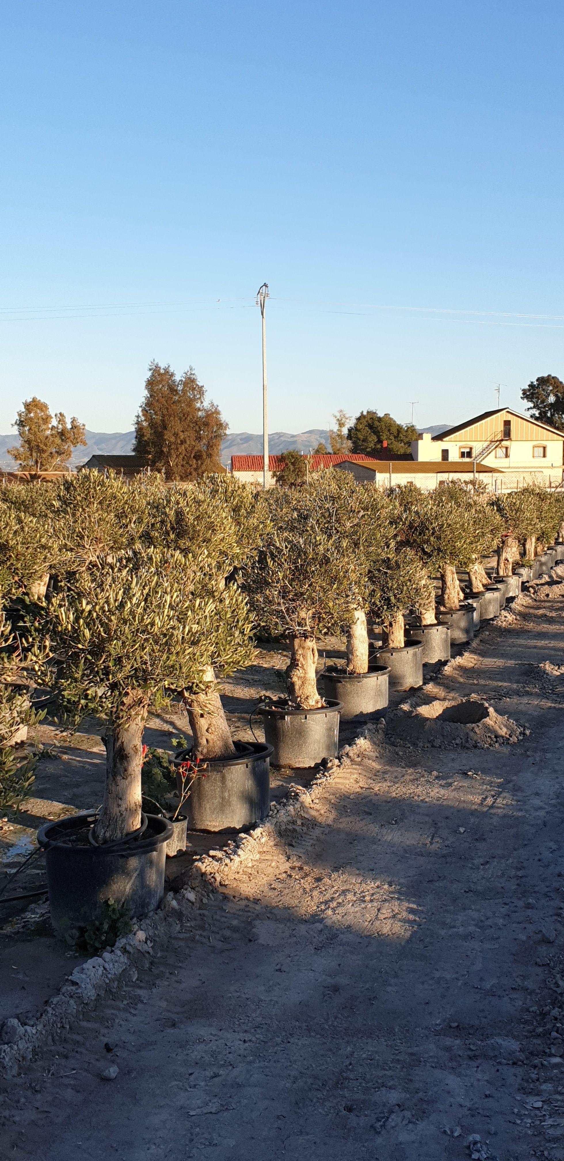 Viveros de flores y plantas Murcia