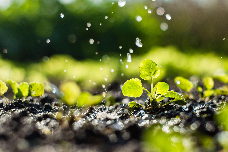 Foto -3 de Viveros de jardinería en  | Plantas Benalla