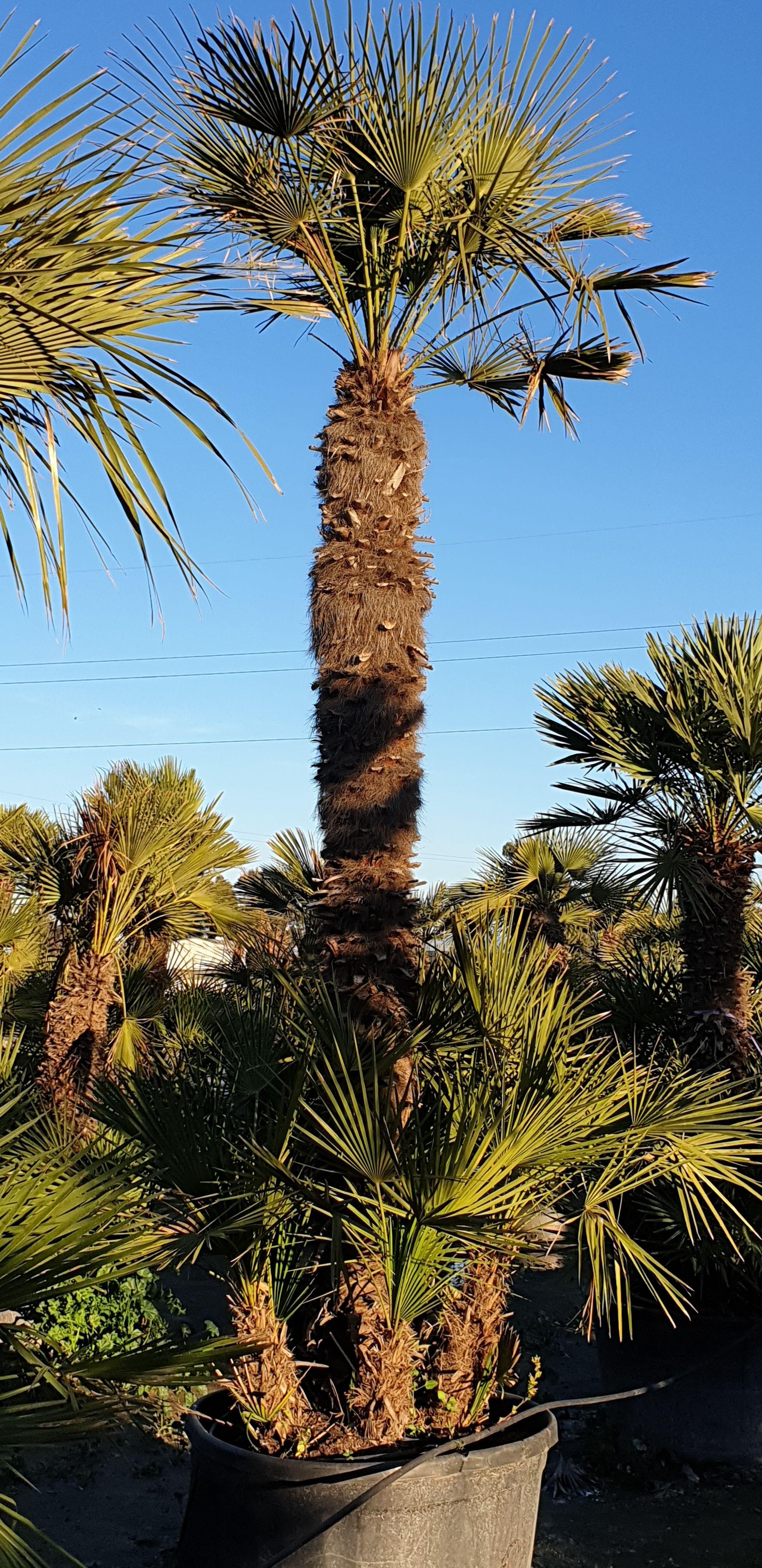 Diseño de jardines Murcia