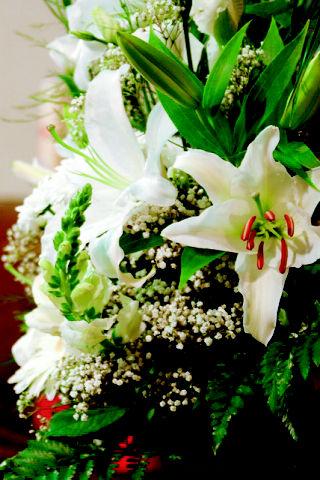 Foto 7 de Floristerías en  | Bouquet Flores y Plantas