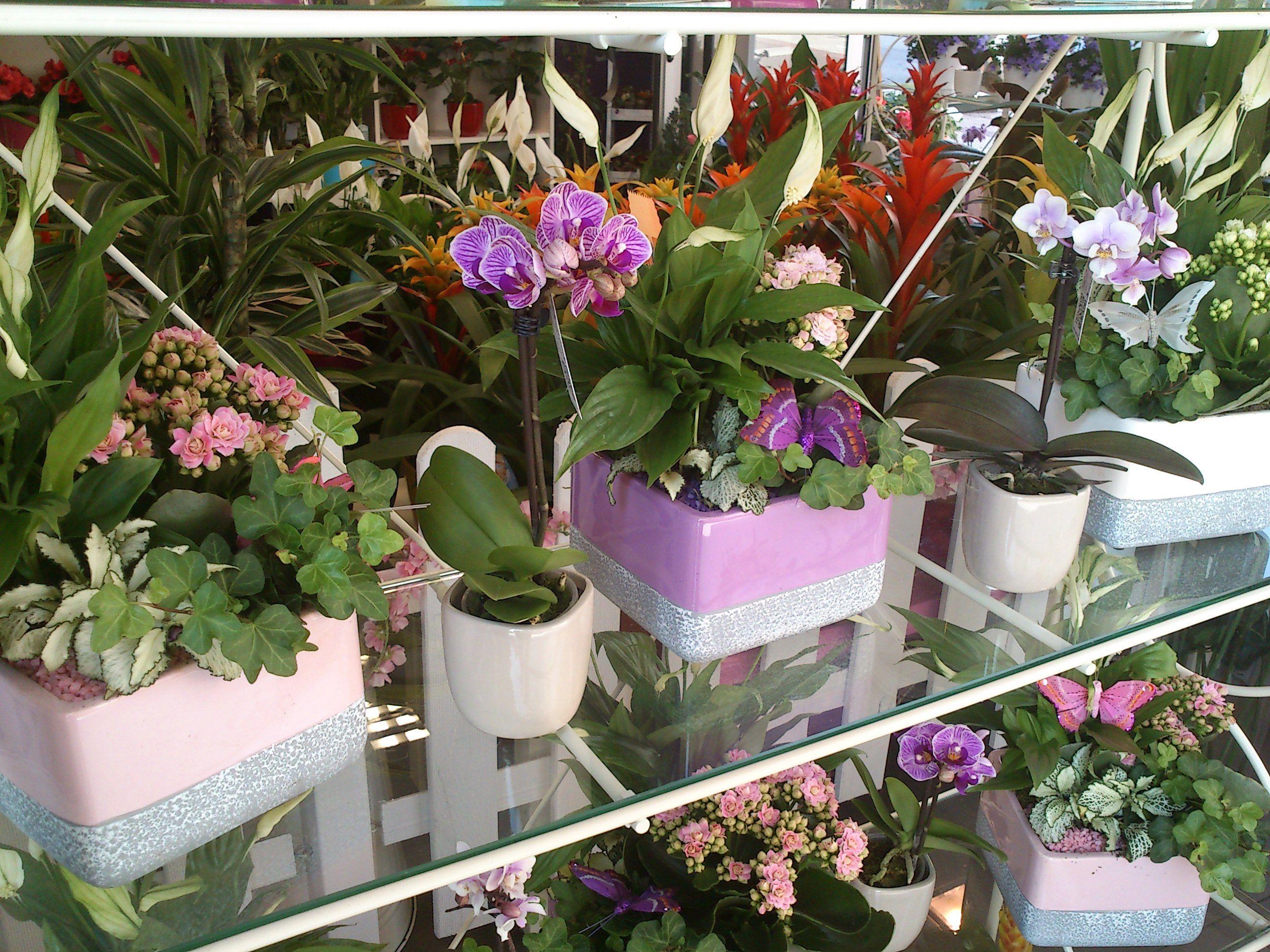 Foto 16 de Floristerías en Oviedo | Bouquet Flores y Plantas