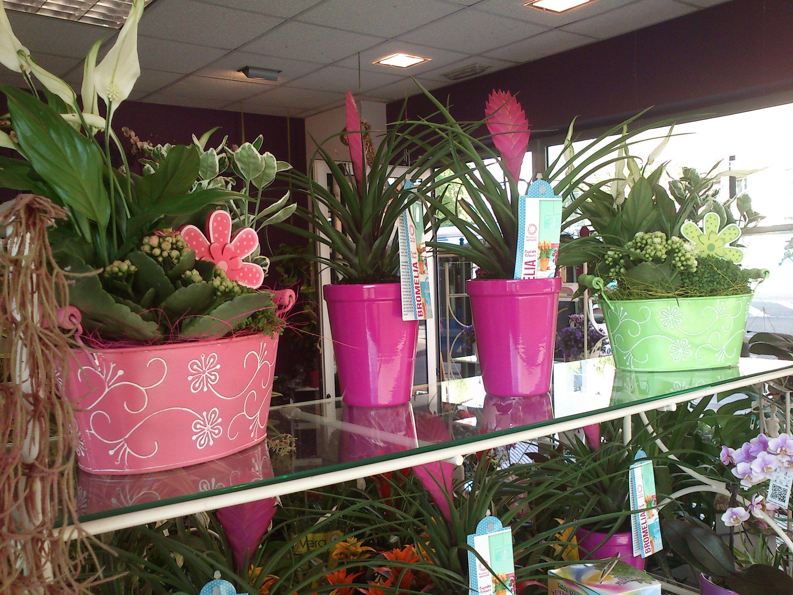 Foto 6 de Floristerías en  | Bouquet Flores y Plantas