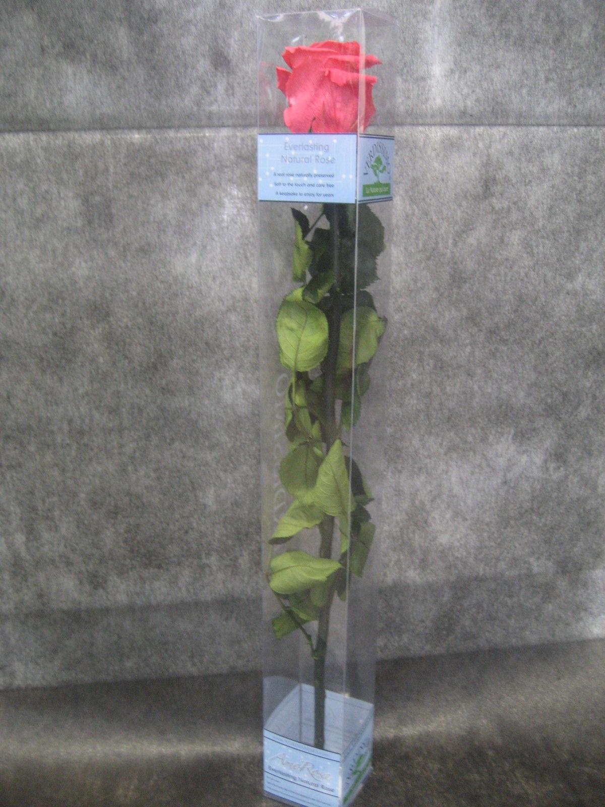 Rosa Preservada Rosa: Nuestras flores de Bouquet Flores y Plantas