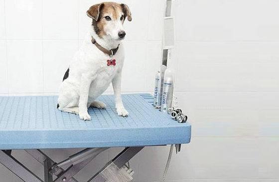 Revisión de tus mascotas en Centro Veterinario Sur
