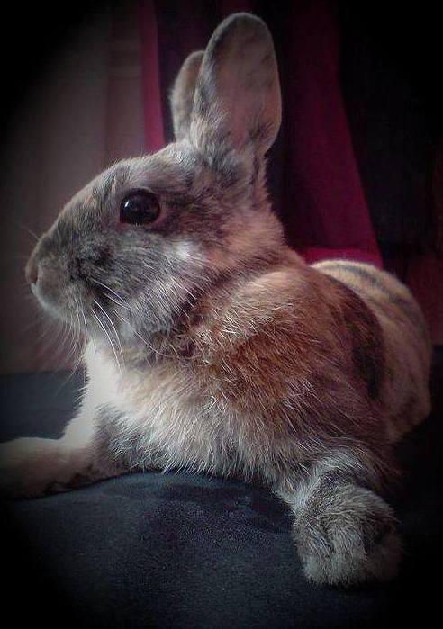 La salud de tu conejo en Centro Veterinario Sur
