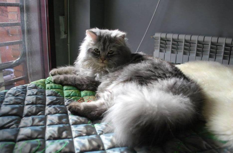 Tratamos a tu gato en Centro Veterinario Sur