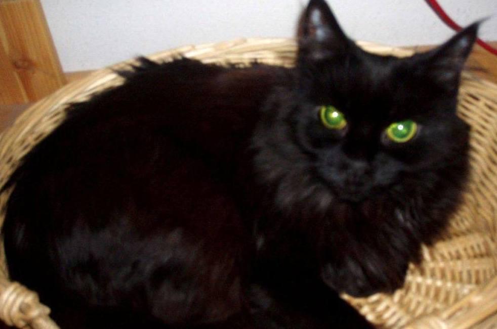 La salud de tu gato en Centro Veterinario Sur