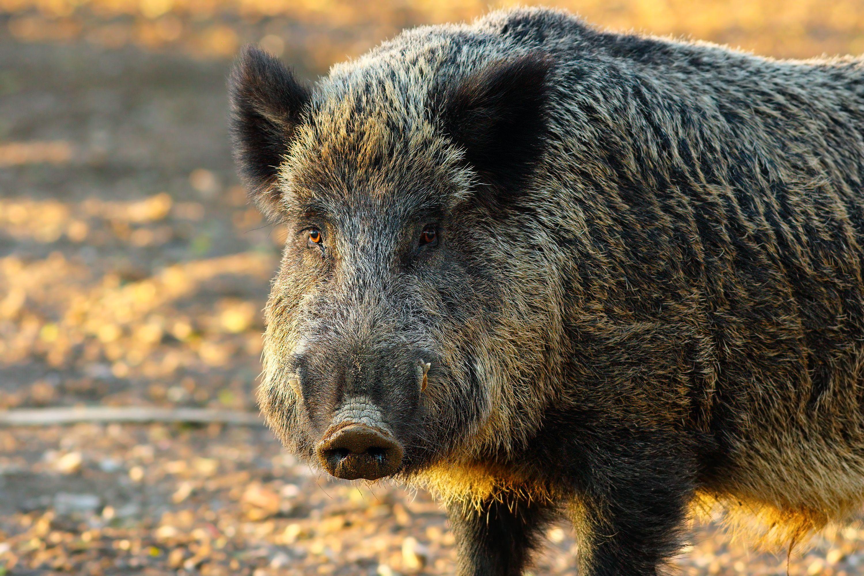 Llevamos los animales a Centros de Recuperación de Animales Silvestres