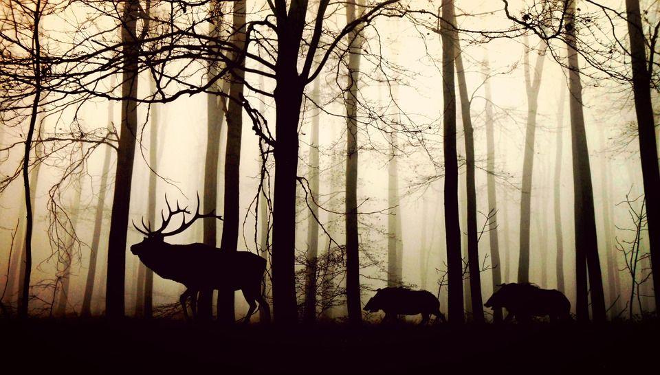 Guarda rural y de caza