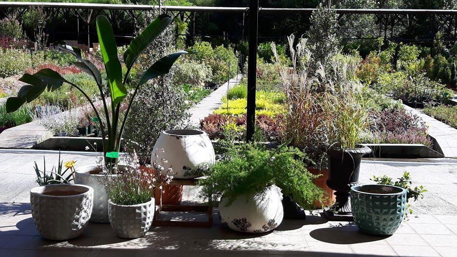 Gran variedad de macetas y jardineras: Servicios de Viveros Fadura
