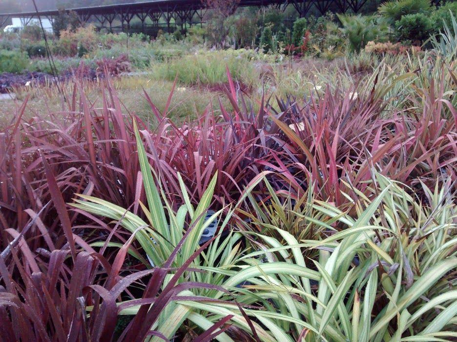 Gran variedad de planta de exterior y arbolado: Servicios de Viveros Fadura
