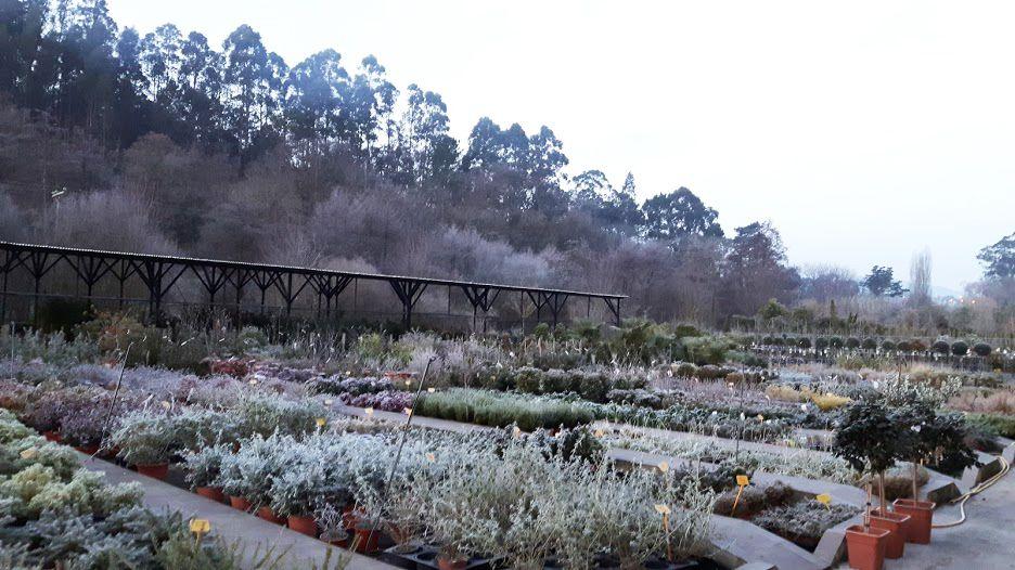 Vivero con diseño y ejecución de jardines en Getxo