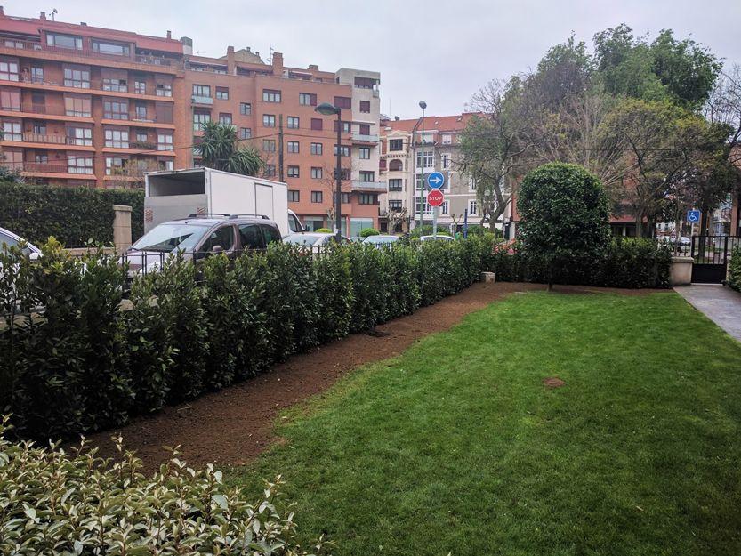 Diseño y ejecución de jardines en Getxo