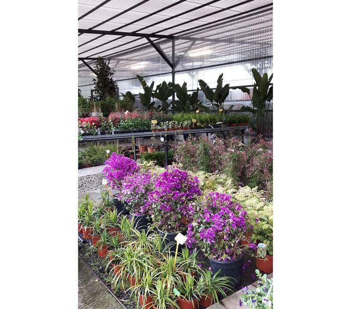 Comprar plantas de exterior en Bilbao